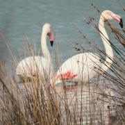 Zona Especial de Protección para las Aves (ZEPA)